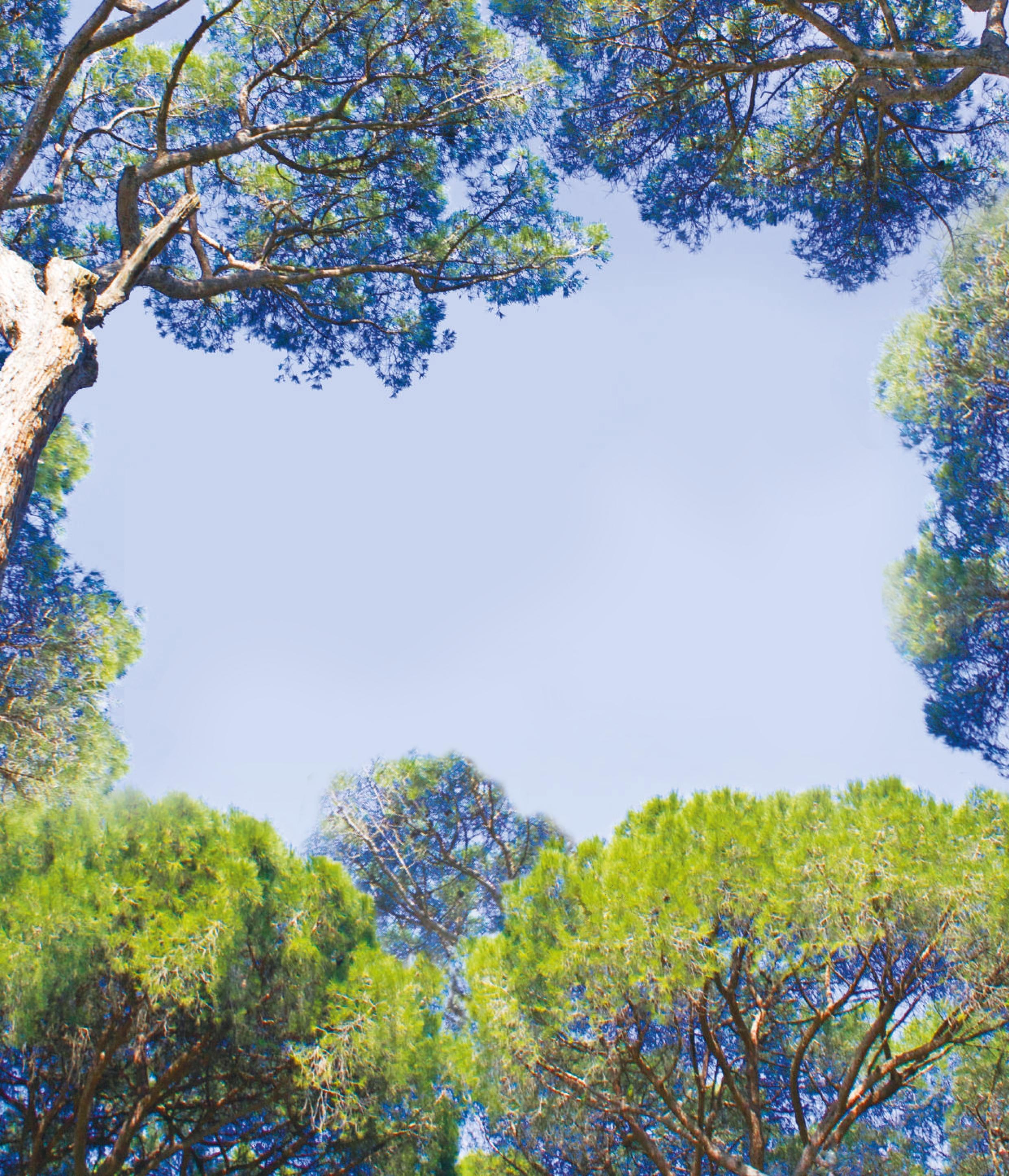 Immagini Di Piante E Alberi comunicare con le piante. esperienzediluce